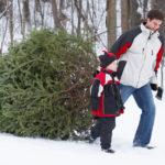 Families can cut their own Christmas tree