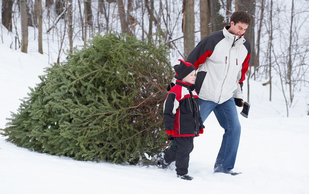 Families can cut their own Christmas tree