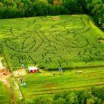 giant corn mazes