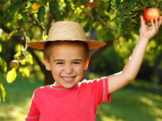 How to safely pick apples
