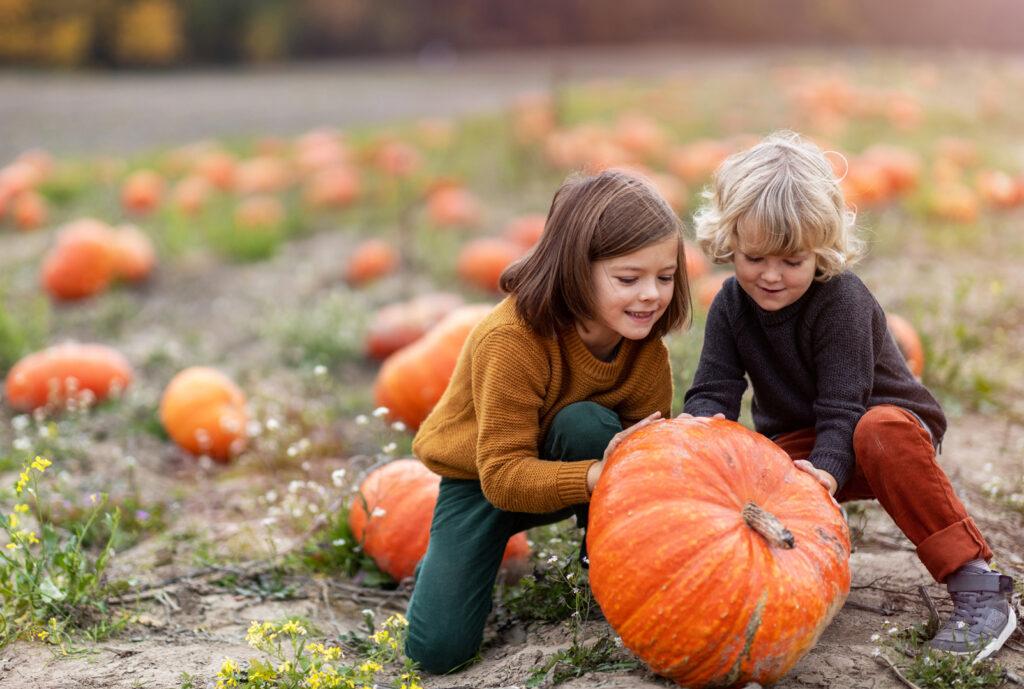 Pumpkin picking not far from Montreal