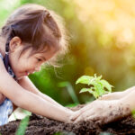 A tree to grow with your child