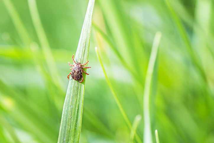 How to stave off ticks