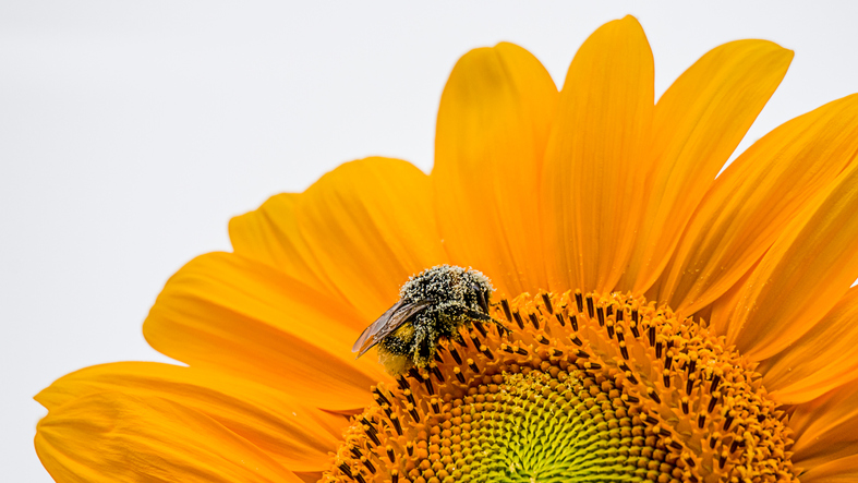 How families can help bees thrive