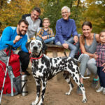 5 great hikes for families and dogs